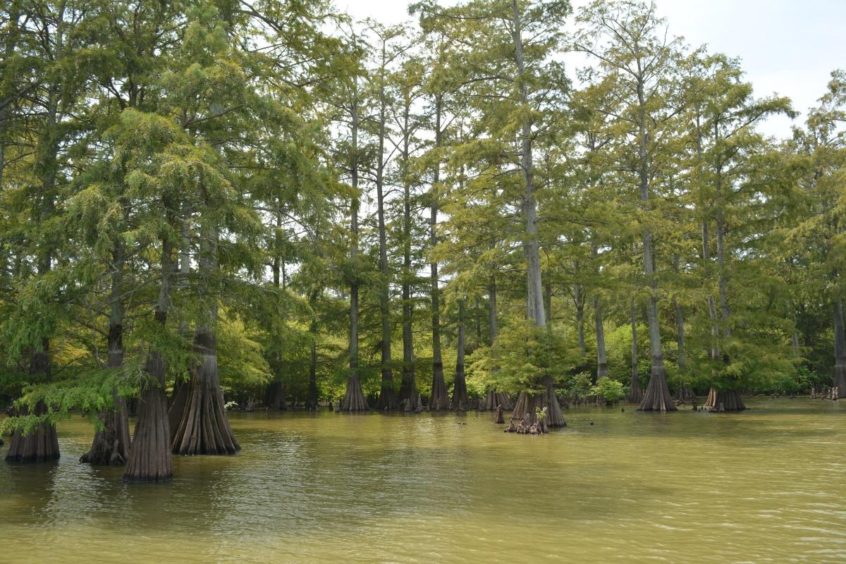 Moon Lake magic and TennesseeWilliams